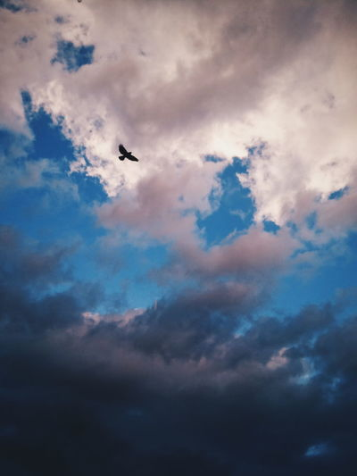 Polish sky. Flying Cloud - Sky Sky Nature VSCO Landscape EyeEm Best Shots Beauty In Nature EyeEm Best Edits Animal Themes Animals Sunlight Birds Sky And Clouds Freedom Storm Cloud