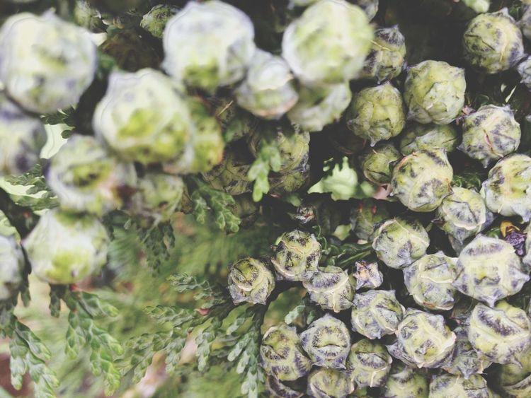 Tree texture Taking Photos