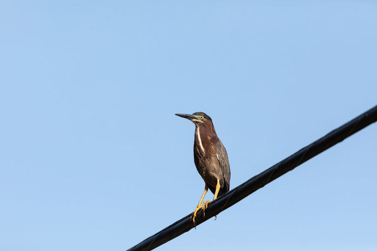 Low angle view of bird perching on a pole against clear sky