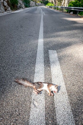 High angle view of cat lying on road
