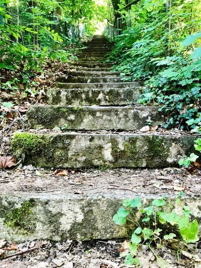 Goahead Way Hope Upstairs Steps Plant No People Day Nature Green Color Direction The Way Forward Forest Tranquility Staircase Green Land