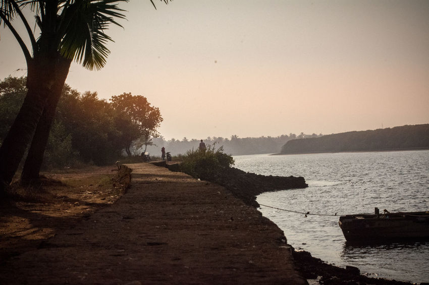 goa Tree Nature Scenics Beauty In Nature Outdoors Silhouette Beach