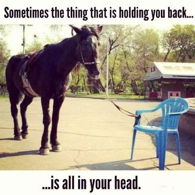 I think this applies to Mostsituations Usuallyme Hilarious lol the poor Uneducatedhorse funny silly random horse horses chairs jokes joke