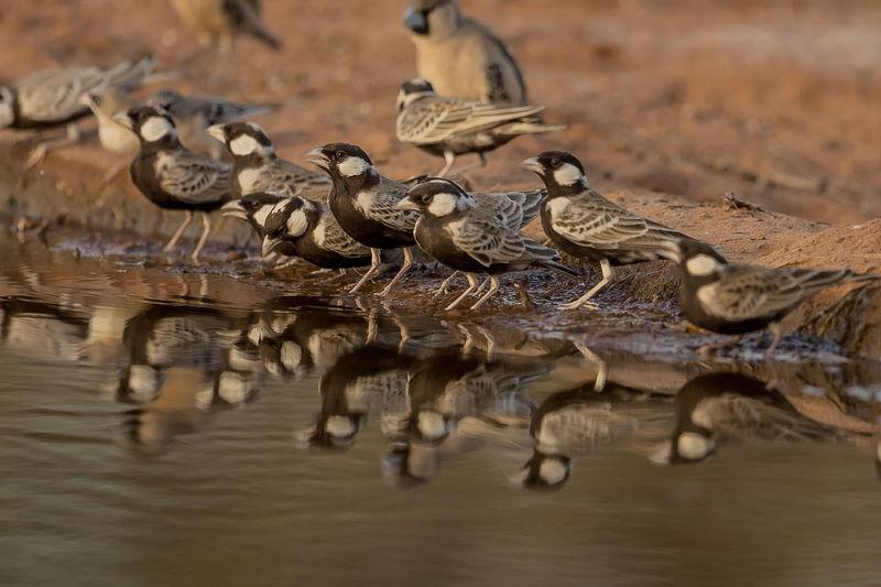 Birds perching at lakeshore