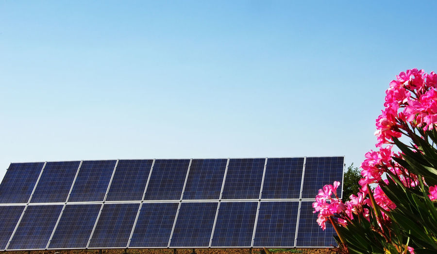 Solar panels on blue sky with bouquet of pink flowers Solar Panels Alternative Energy Blue Clear Sky Environmental Conservation Fuel And Power Generation Nature Pink Flowers Pink Flowers Blue Sky Renewable Energy Sky Solar Panel Technology
