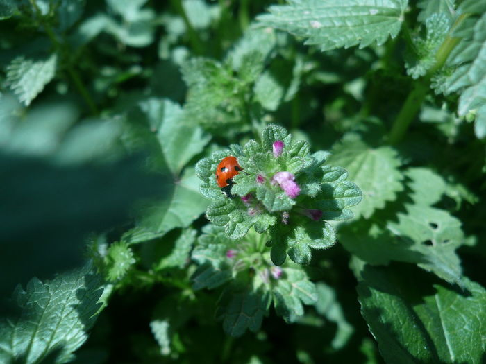 DIRDS AND LADIES Ladybirds 🐞 Ladybird🐞 Ladyphotographerofthemonth ROJO INSECT Rojo Y Negro Beauty In Nature Freshness Green Color Insect Insect Photography Insects  Ladybug Nature Plant Red And Black Colour Red And Black Insect Rojo