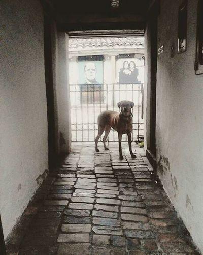 Bogotá Chorrodequevedo Perrito