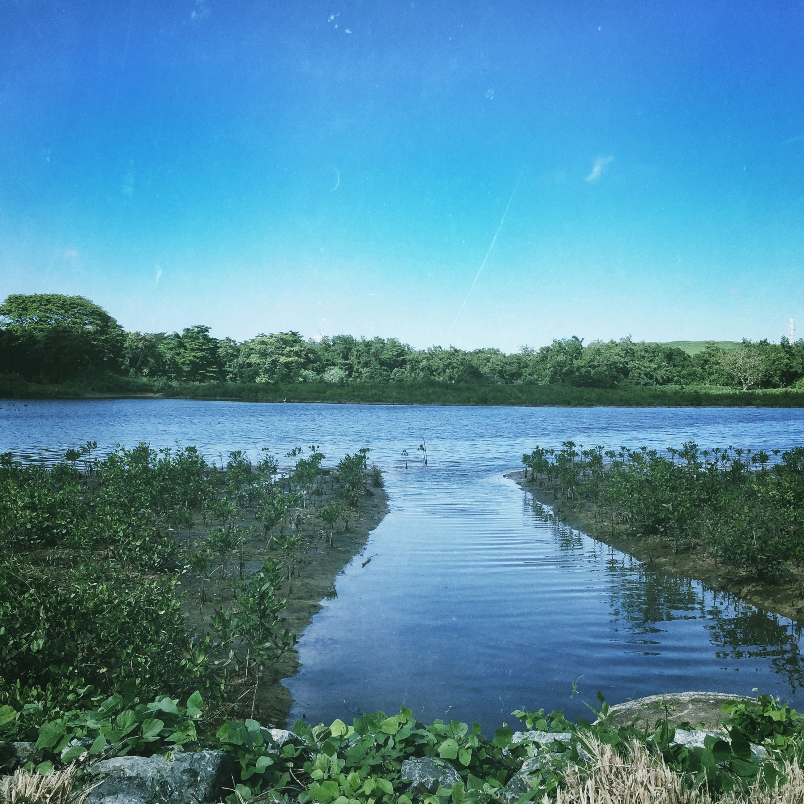 water, blue, tranquility, tranquil scene, tree, clear sky, scenics, lake, beauty in nature, reflection, nature, sky, copy space, growth, idyllic, plant, grass, river, day, non-urban scene