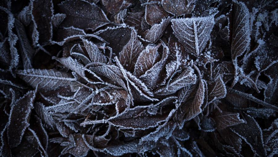 Full frame shot of frost