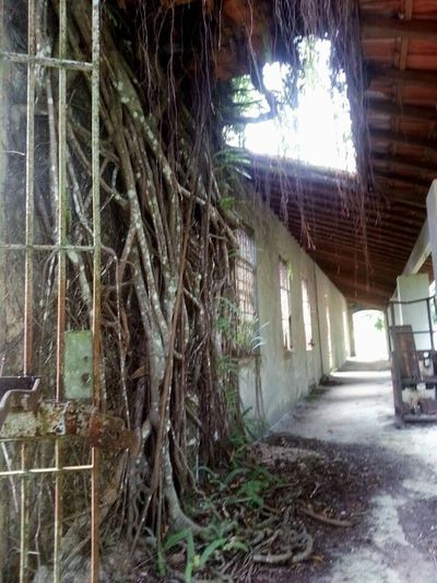 Old Buildings Old Prison Nopeople Tree Built Structure Day Travel Sunlight Ilhagrande Rio De Janeiro