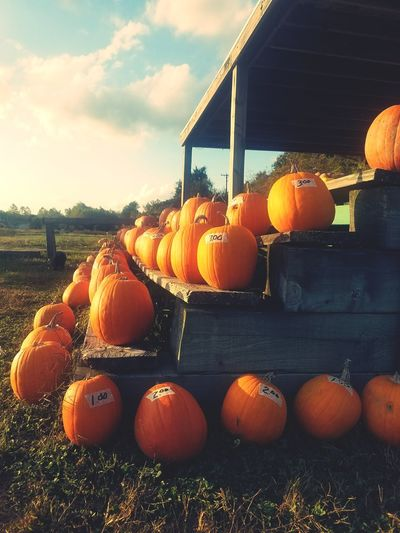 Pumpkins Pumpkin Season Orange Color Agriculture Freshness No People Cloud - Sky Outdoors Day
