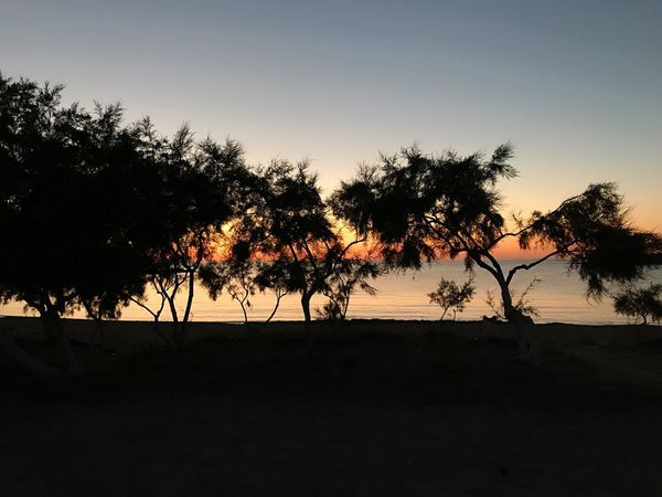 Tree Silhouette Nature Sunset Beauty In Nature Tranquil Scene Tranquility Scenics Sky Outdoors No People Landscape Growth Clear Sky Palm Tree Water Day Grece Antiparos