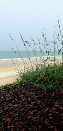 Water Sea Sky Grass