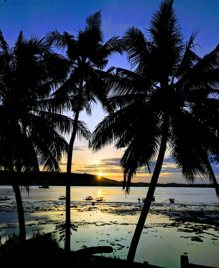Tree Sunrise Silhouette Nature Reflection Silhouette Scenics Sky Water Sea Beauty In Nature Outdoors Beach Tranquility Tropical Climate Sun Landscape No People Horizon Over Water Blue Cloud - Sky Nias Island Indonesia_photography Sun Google Pixel Travel Destinations Vacations Sand Sea An Eye For Travel
