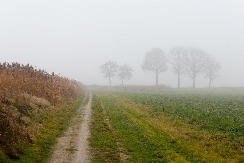 misty day, desolation Desolate Fade To Grey Fog Landscape Nature No People Outdoors Schokland The Way Forward Tranquility Tree