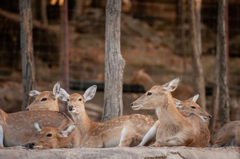 Deers sitting at zoo