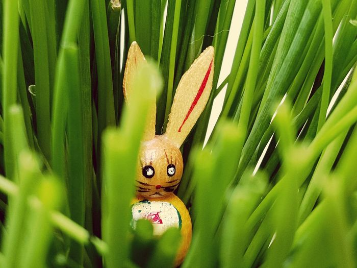 High Angle View Of Easter Bunny By Grass