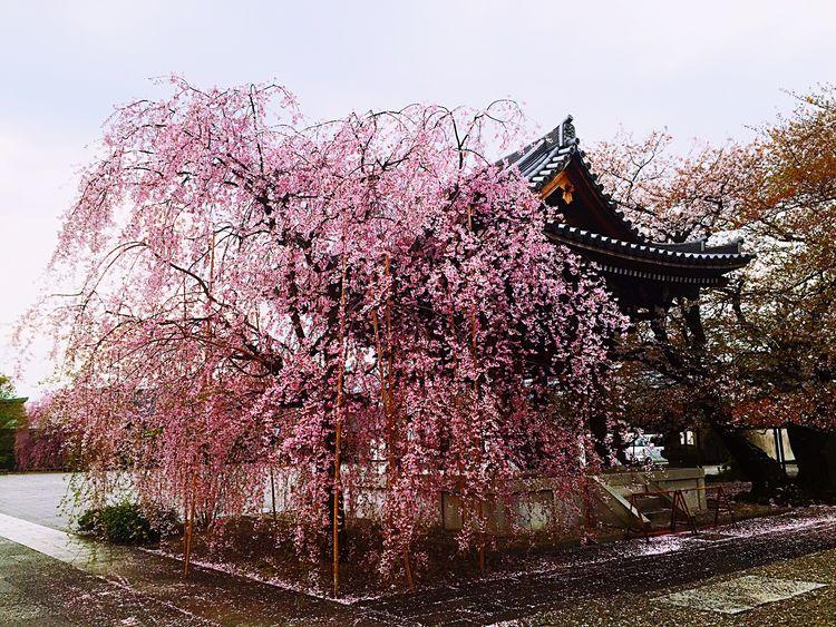 Cloudy Sky Cherryburassamu🌸🌸🌸 2016cherryburassamu🌸🌸🌸 Japan Walking Alone...