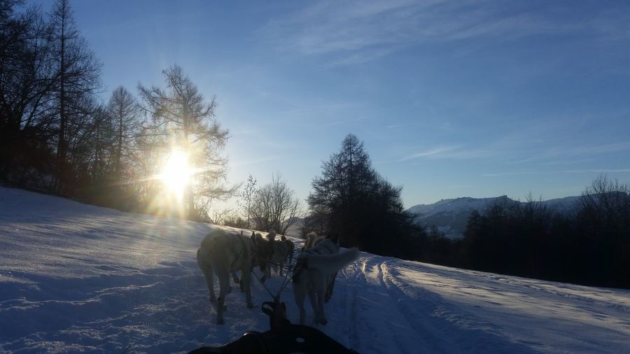 Rear View Of Dogs Pulling Sled On Snow Covered Field Against Sky