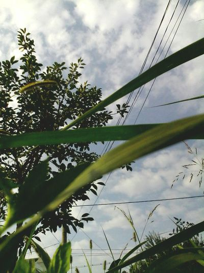 Low Angle View Cloud - Sky Cloud Nature Day Cloudy Outdoors No People Beauty In Nature Sky Tree Edited By @wolfzuachis Eyeem Market Branch Colour Of Life Plants Enhanced Eyeemphoto Wolfzuachis Ionitaveronica @wolfzuachis Showcase: 2016 Cloudy Skyporn Nature