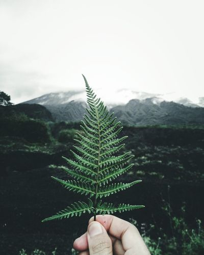 Morning, folks! Outdoors Folkgood Folkmagazine Folkindonesia Folkbrasil Folk Folklore Livefolk Livefolkindonesia Livefolksindonesia Livefolks Modernoutdoorsman Mountain Nature Plant Green Color Pinaceae