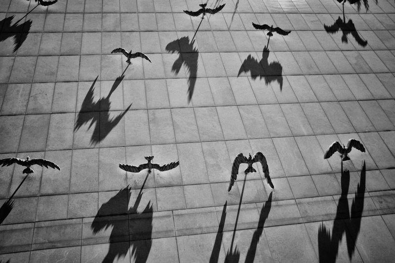 Black And White - Milano The Street Photographer - 2016 EyeEm Awards