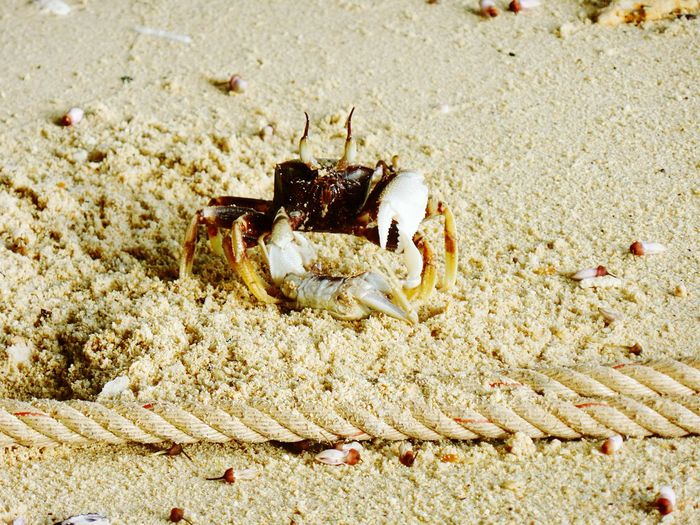 Hermit Crab Animal Themes Sea Life Animals In The Wild Crustacean Nature EyeEmNewHere