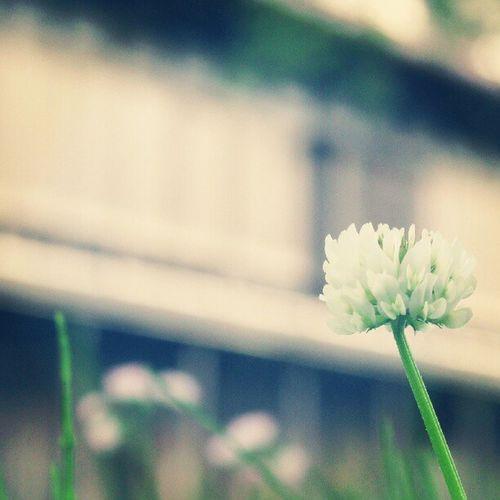お花、かわいい