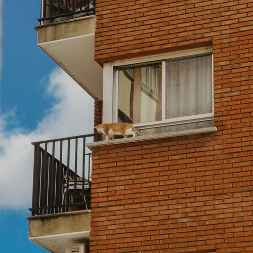 Cat looking at window of building