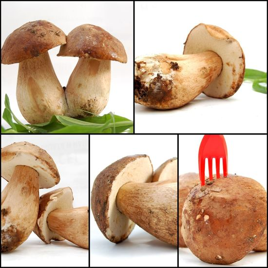 mushrooms Boletus Edulis Collage Art Bread Close-up Collage Day Food Food And Drink Freshness Healthy Eating Indoors  Multiple Image Mushroom No People Plate Ready-to-eat Still Life