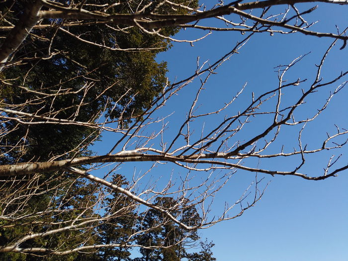 Japan Tree Plant Branch Low Angle View Sky Nature No People Tranquility Beauty In Nature Day Clear Sky Bare Tree Growth Blue Outdoors Scenics - Nature Sunlight Tranquil Scene Dead Plant Winter