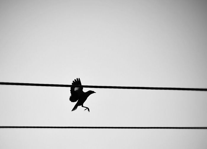 Low angle view of bird flying by cables against clear sky