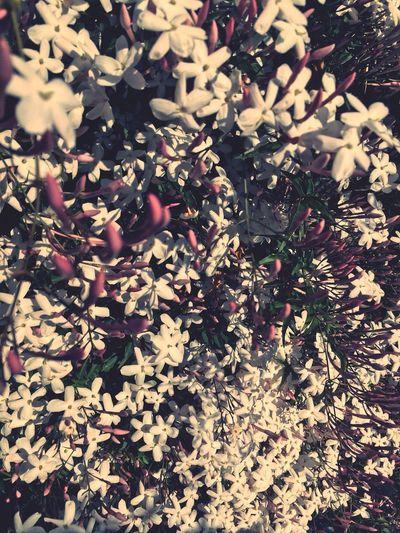Flowers Iloveit