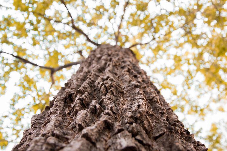The Tree Winter