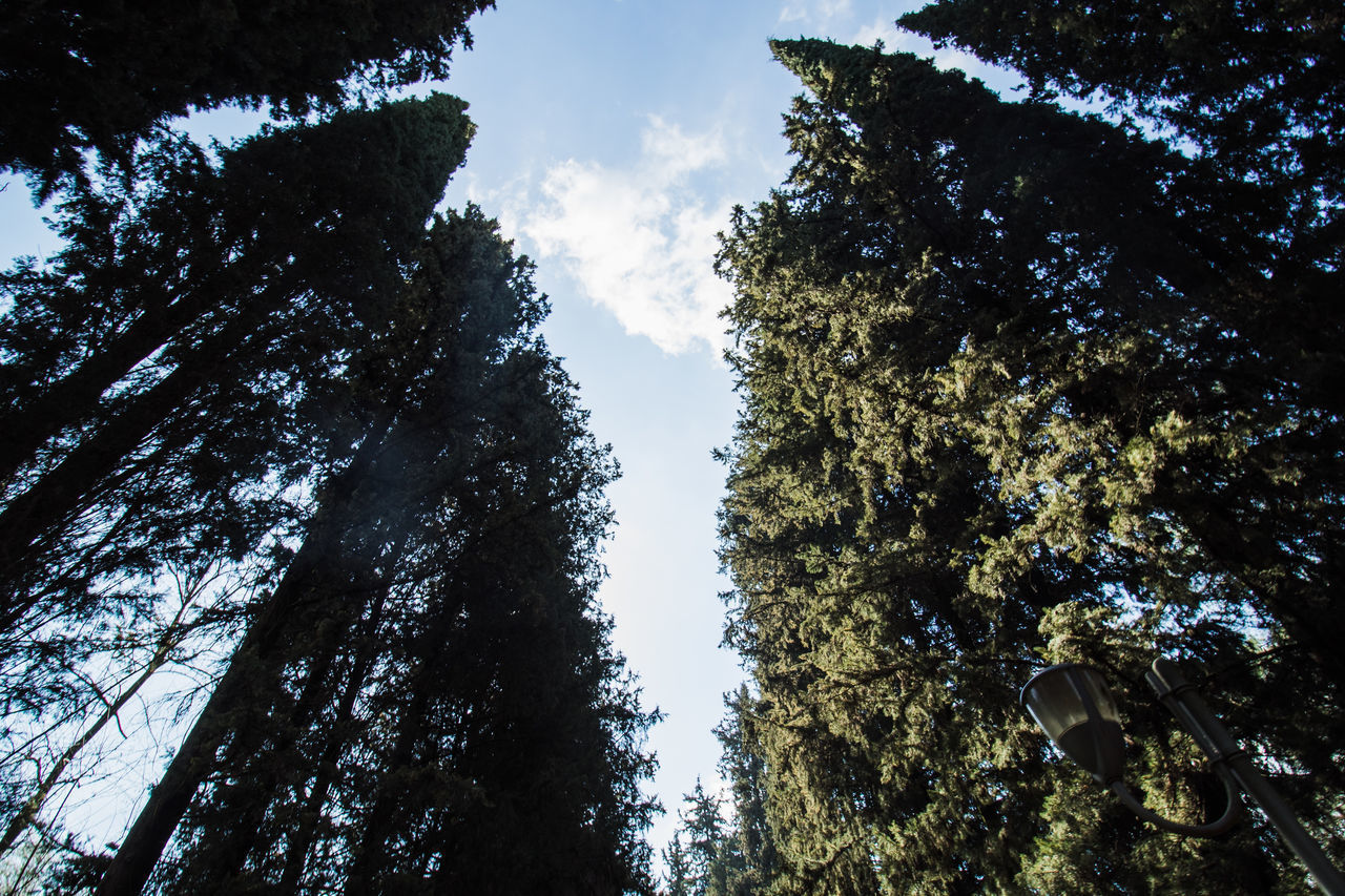 LOW ANGLE VIEW OF TREES GROWING IN FOREST AGAINST SKY