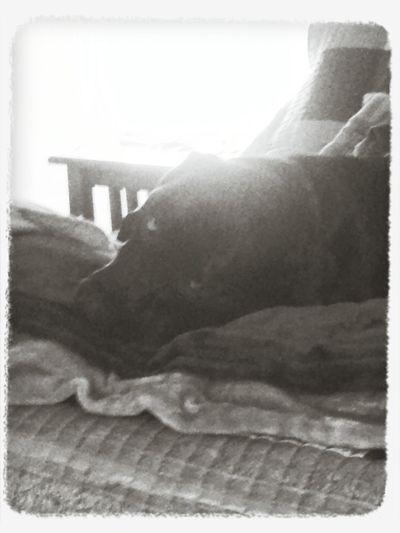 my boy Relaxing