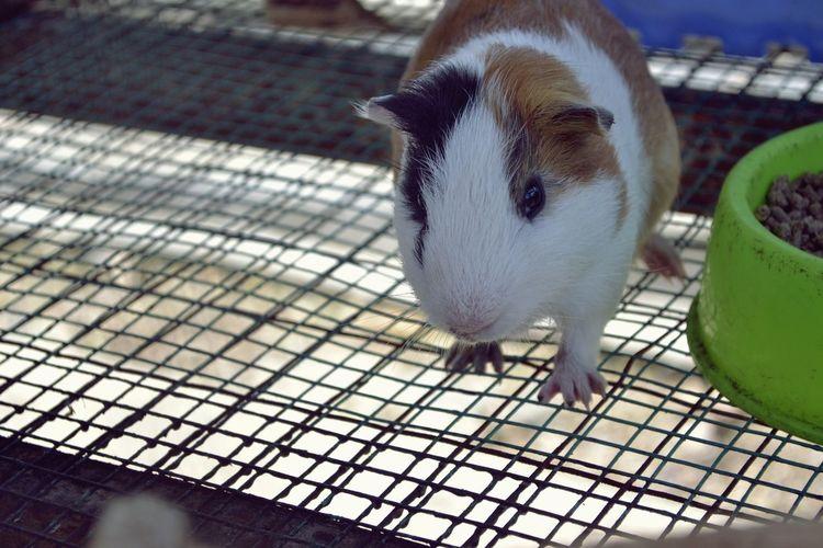 A Animal Eye Animal Themes Animal Head  Animal Themes Animal Wildlife Rabbit Rabbit Eye Rabbit Village Zoo Zoology