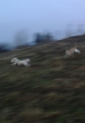Blurred Motion Nature Speed Outdoors No People Motion Animal Themes Fun Best Friends.  Dog Dogcatfriendship Cat Mobilephotography Samsungphotography West Highland White Terrier My Buddie Hobby Photography