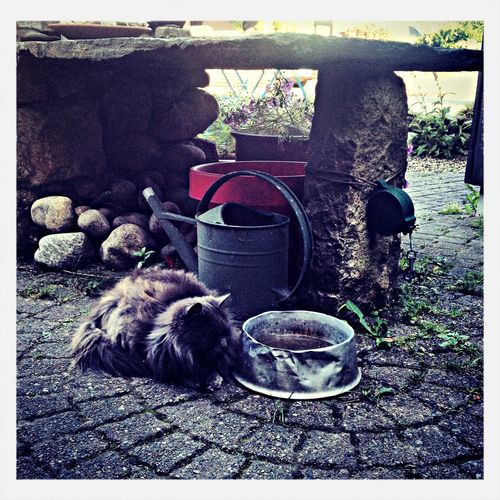 my dog are not allowed to drink his water anymore, the cat next door has invaded his world. Cat Hanging Out Check This Out Water_collection