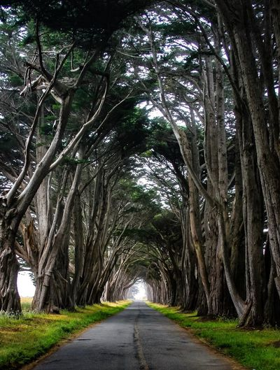 Cypress Tree Tunnel Pt. Reyes National Seashore Tree Plant The Way Forward Direction Diminishing Perspective Road Transportation Growth No People Nature Trunk Day Beauty In Nature Tree Trunk Tranquility Treelined Branch vanishing point Outdoors Green Color