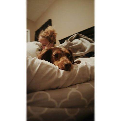 This little spoiled brat lol. Dog Cute Dogsofinstagram Instadog love petstagram pet doglover dogstagram instagramdogs