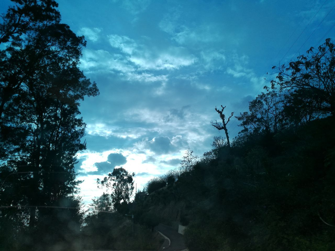 tree, silhouette, sky, outdoors, cloud - sky, nature, no people, day, low angle view, beauty in nature, scenics