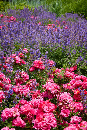 Abundance Beautiful Nature Beauty In Nature Blooming Blossom Botany Change Colorful Flower Flower Head Flowers,Plants & Garden Freshness Growing Growth In Bloom Macro Nature Naturelovers Petal Pink Pink Color Springtime