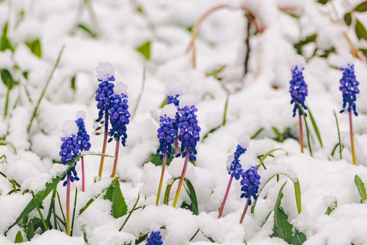 Close-up of purple flowering plants on field during winter