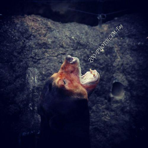 ZOO-PHOTO Zoo Animals マレーグマ 上野動物園 僕の声が届いているかい?