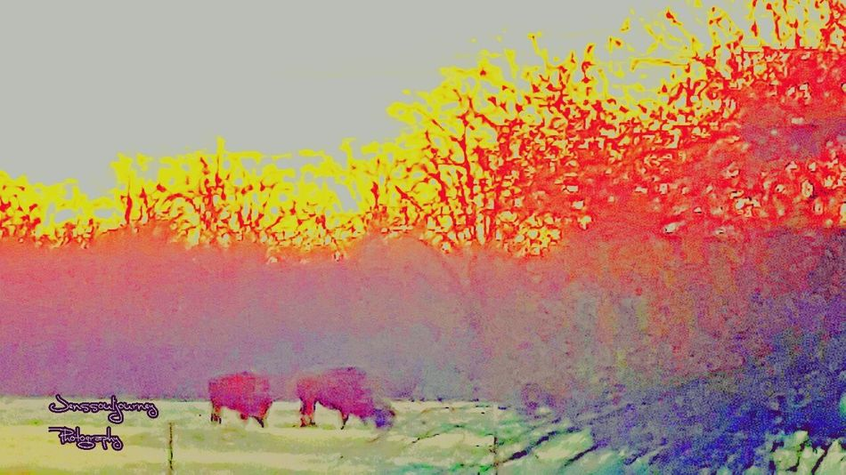 Sunrise Nature Outdoors Buffalo Native Pride Native American Art RezLife Out My Back Door Check This Out Check This Out! From My Point Of View USA Eyem Gallery Eyem And Getty Collection Artistic Expression Animal Themes Landscape Tranquility Sunrise_Collection Sunrise Porn Modoc Tribe Home On The Range Finding New Frontiers