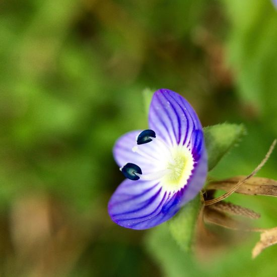 IPhoneography Olloclip Olloclip_macro Macro Purple Flower Flowers Snapseed Macro Beauty The Great Outdoors - 2016 EyeEm Awards