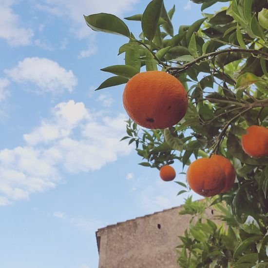 Orange Fruit Food Mediterranean  Italy Sardinia Healthy