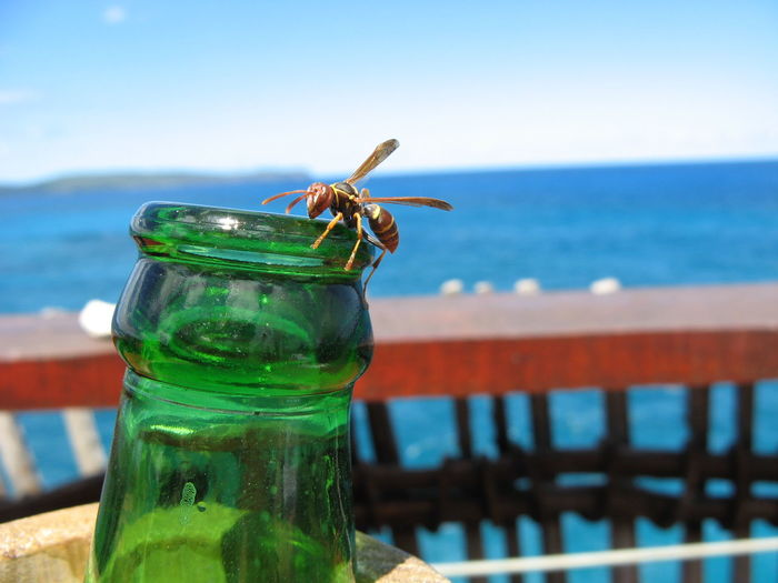 Close-up of wasp on bottle