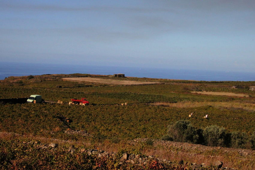Pantelleria Agriculture Day Field Grapeyard Harvest Landscape Nature October 2015 Outdoors Scenics Sea Sky Water
